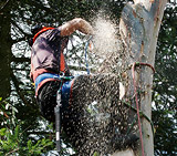 Edward Staveley - tree surgeon at Yorkshire Woodland Management and is also a keen shooter